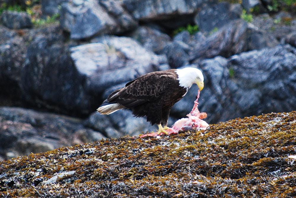BC Wildlife Photo