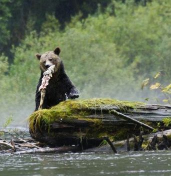 BC Wildlife Photo