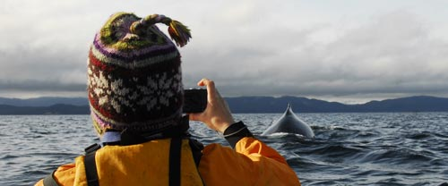 mothership kayaking humpback whale