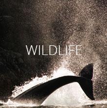 nav-wildlife