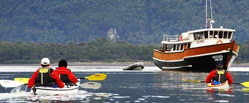 patagonia sea kayaking mothership