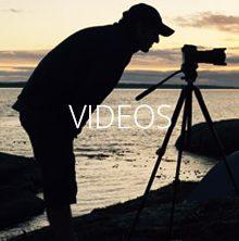 Wildlife & Tour Videos