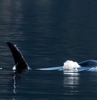 BC Whale Watching