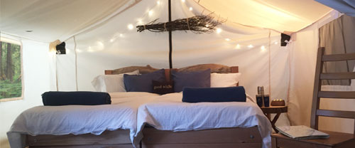 Glamping whale watching tents, Blackfish Sound