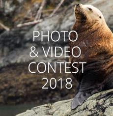 nav-contest-2018