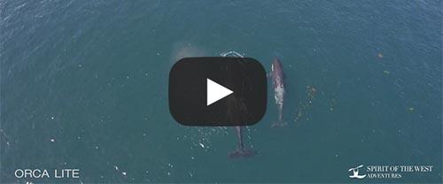 orca lite kayaking video