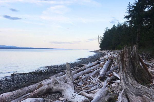 Quadra Island shoreline driftwood