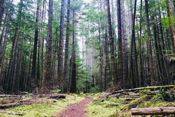 Travel on a rainforest trail on Vancouver Island