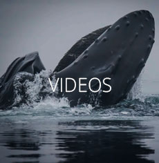 Kayaking and Whale Videos