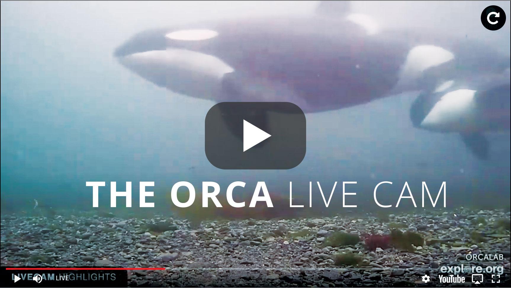 Live Orca Cam